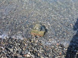 Portbou: playa de piedras negras